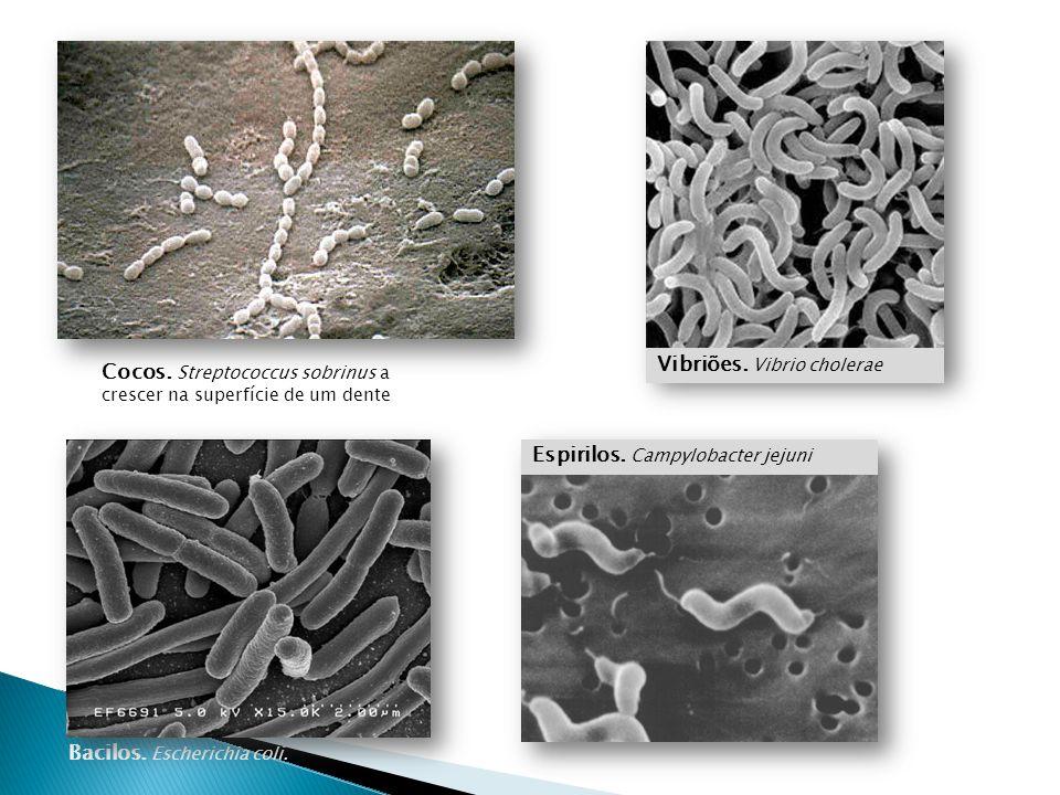 Vibriões. Vibrio cholerae