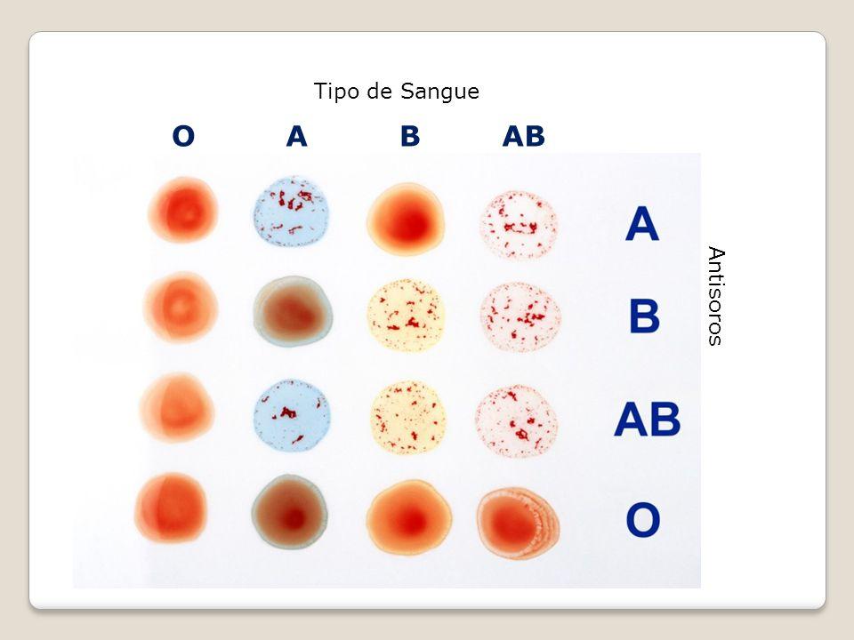 Tipo de Sangue O A B AB Antisoros