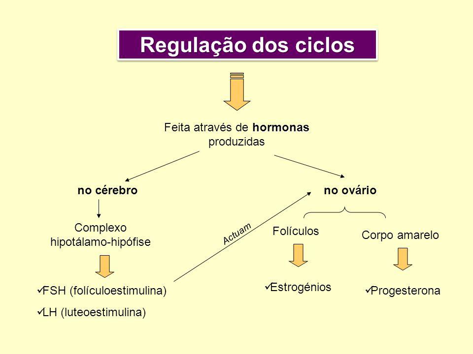 Regulação dos ciclos Feita através de hormonas produzidas no cérebro