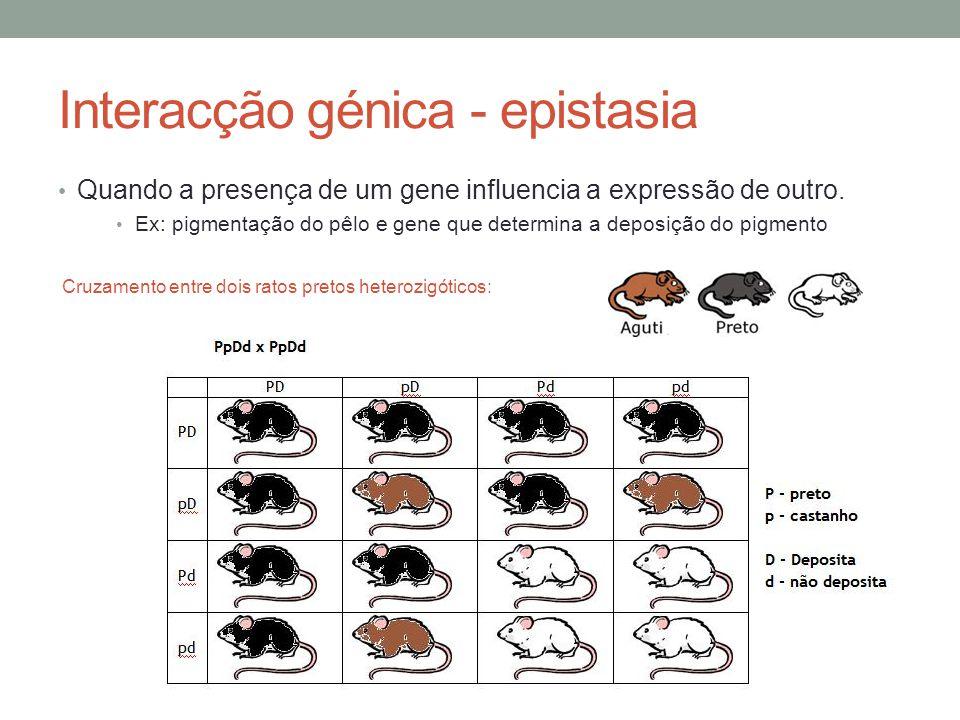 Interacção génica - epistasia