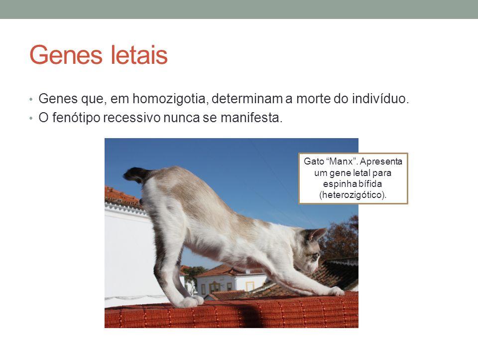 Genes letais Genes que, em homozigotia, determinam a morte do indivíduo. O fenótipo recessivo nunca se manifesta.