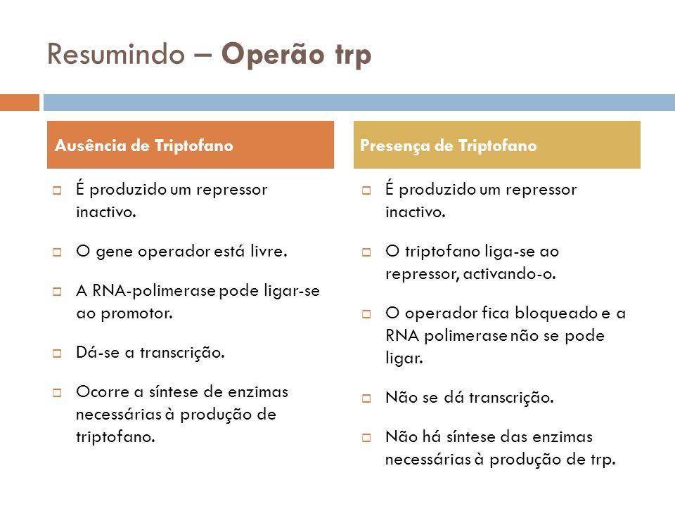 Resumindo – Operão trp Ausência de Triptofano Presença de Triptofano