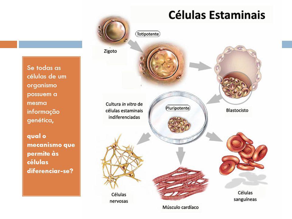 Se todas as células de um organismo possuem a mesma informação genética,