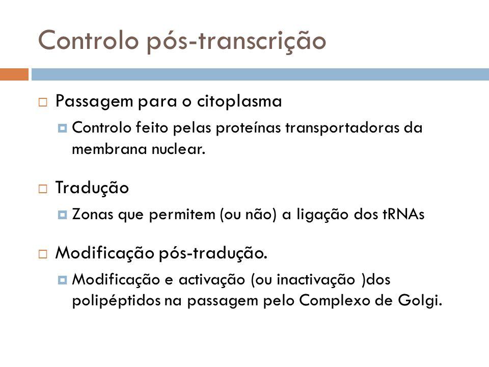 Controlo pós-transcrição