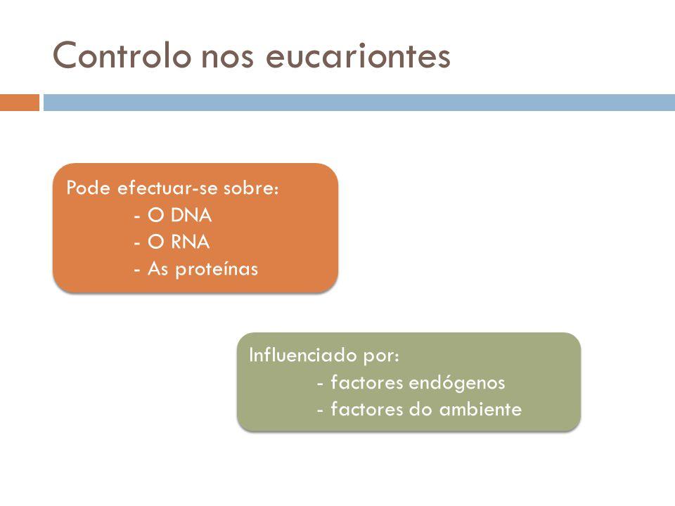 Controlo nos eucariontes