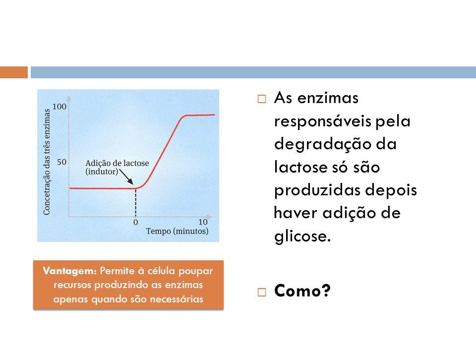 As enzimas responsáveis pela degradação da lactose só são produzidas depois haver adição de glicose.