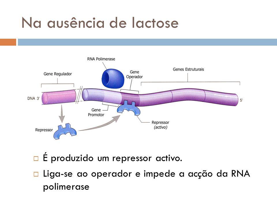 Na ausência de lactose É produzido um repressor activo.