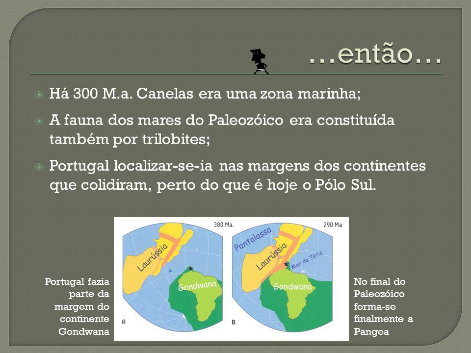 …então… Há 300 M.a. Canelas era uma zona marinha;