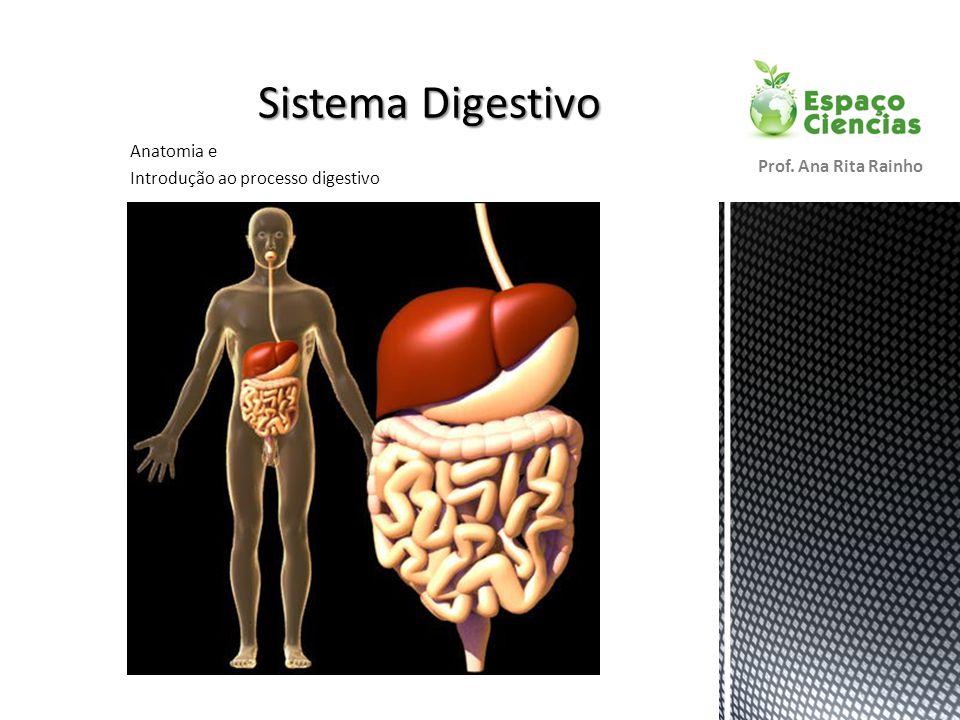 Anatomia e Introdução ao processo digestivo