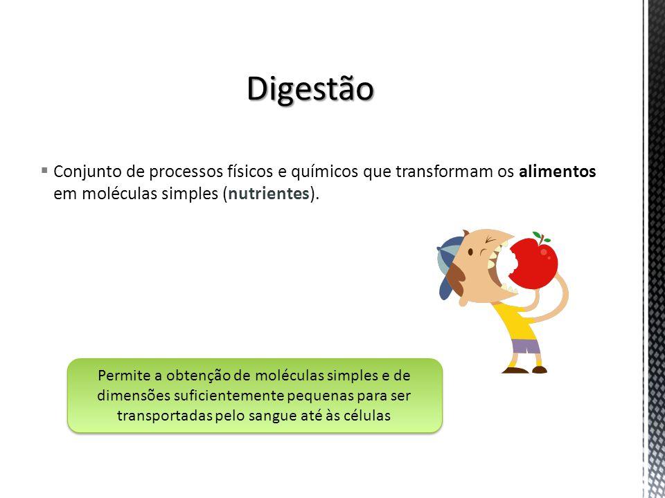 Digestão Conjunto de processos físicos e químicos que transformam os alimentos em moléculas simples (nutrientes).