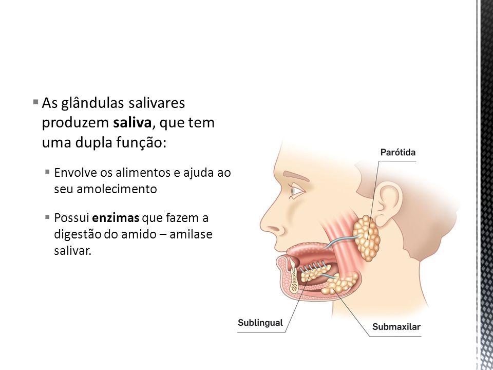 Boca e glândulas salivares