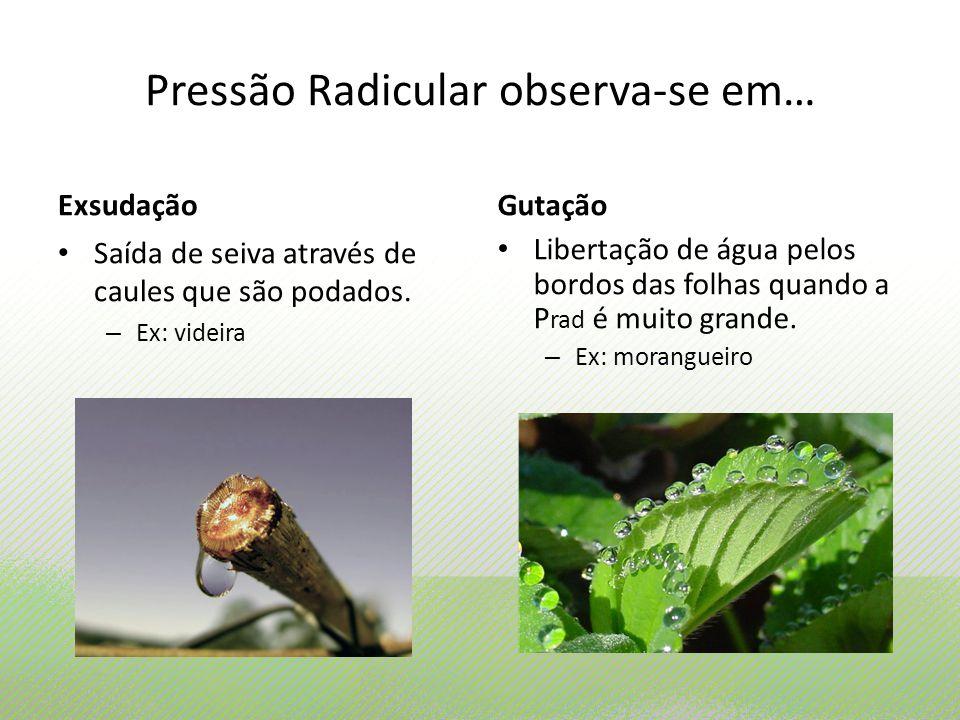 Pressão Radicular observa-se em…