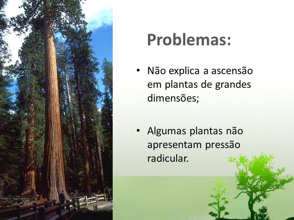 Problemas: Não explica a ascensão em plantas de grandes dimensões;