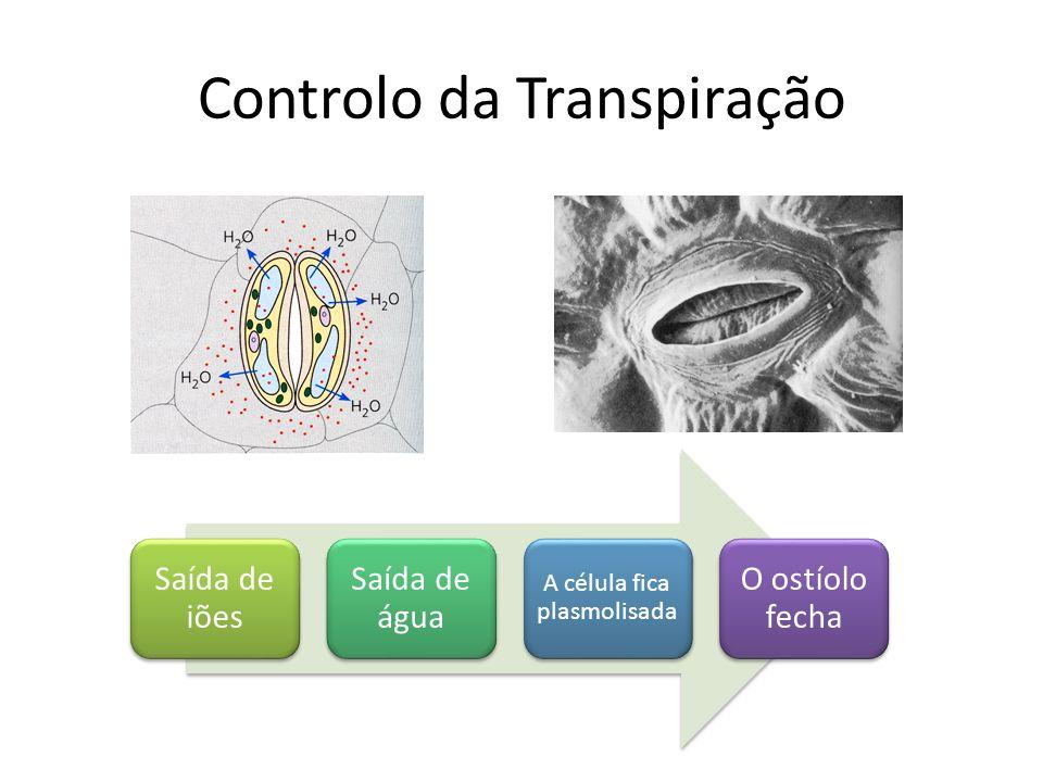 Controlo da Transpiração