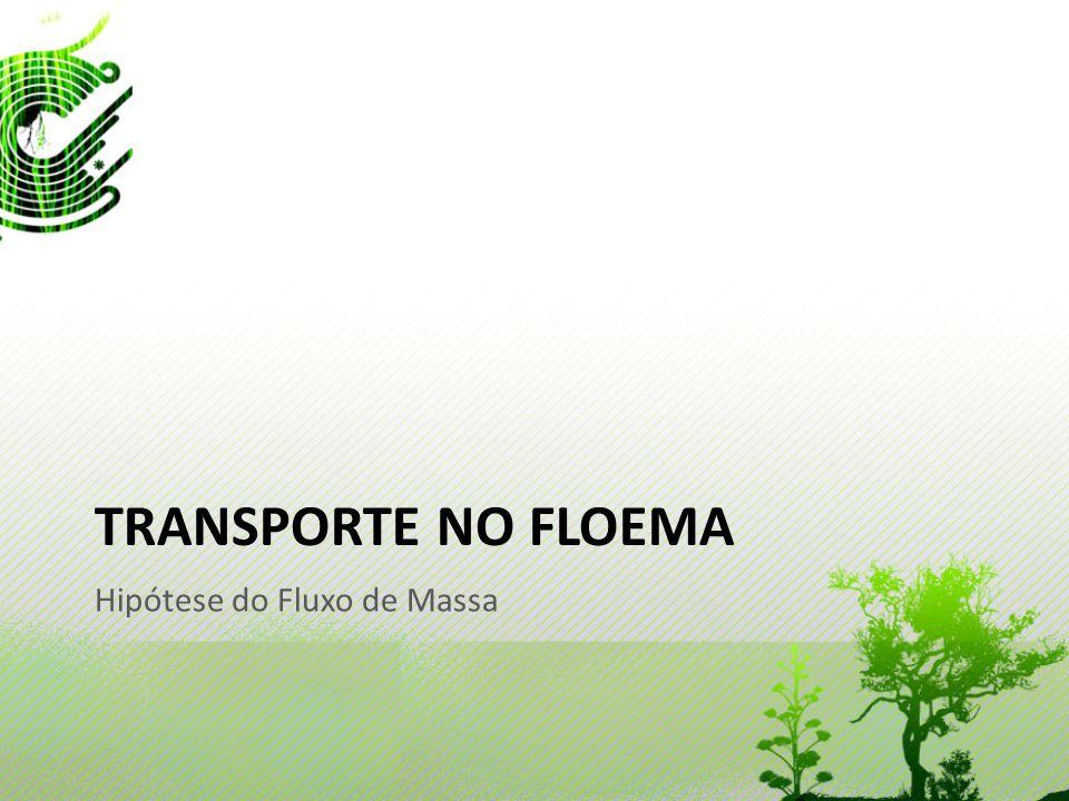 Transporte no Floema Hipótese do Fluxo de Massa