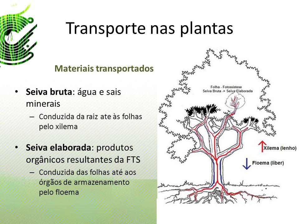 Transporte nas plantas