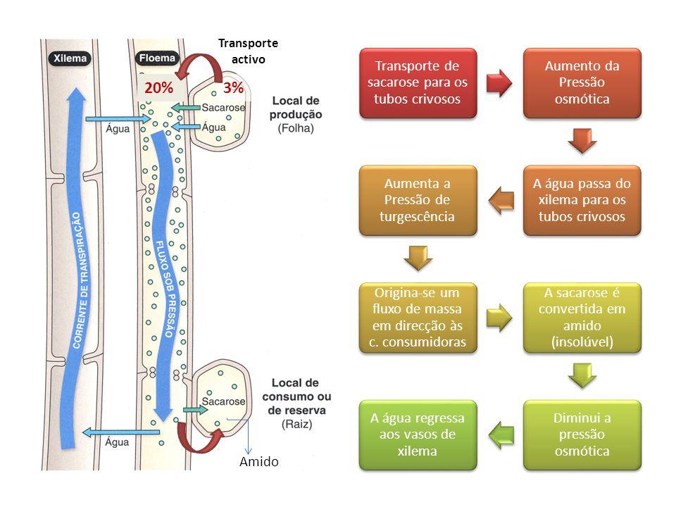 20% 3% Transporte de sacarose para os tubos crivosos