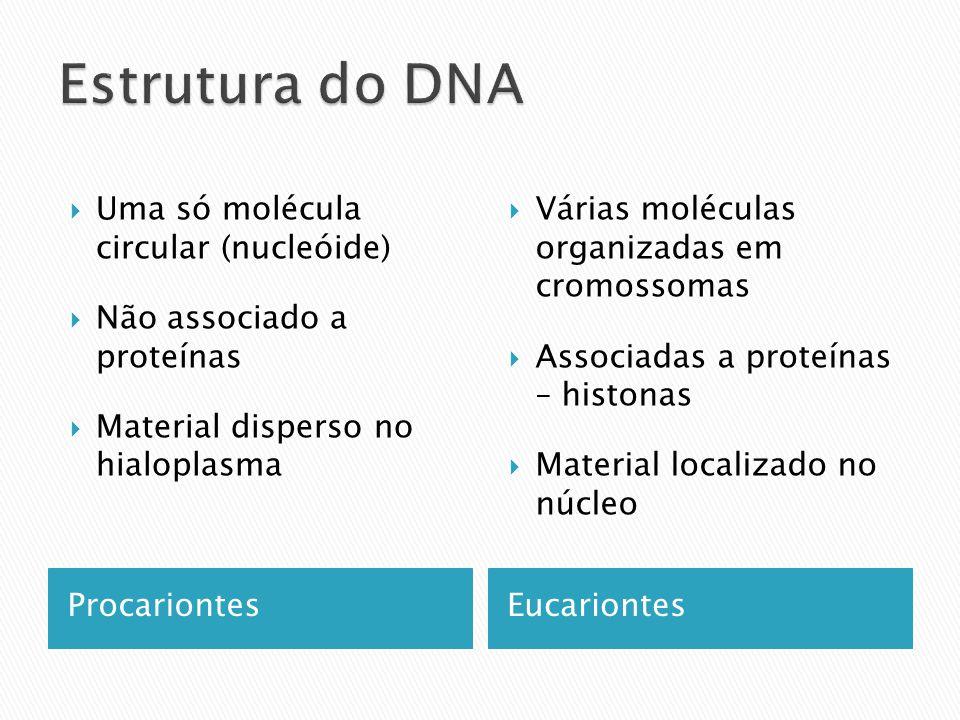 Estrutura do DNA Uma só molécula circular (nucleóide)