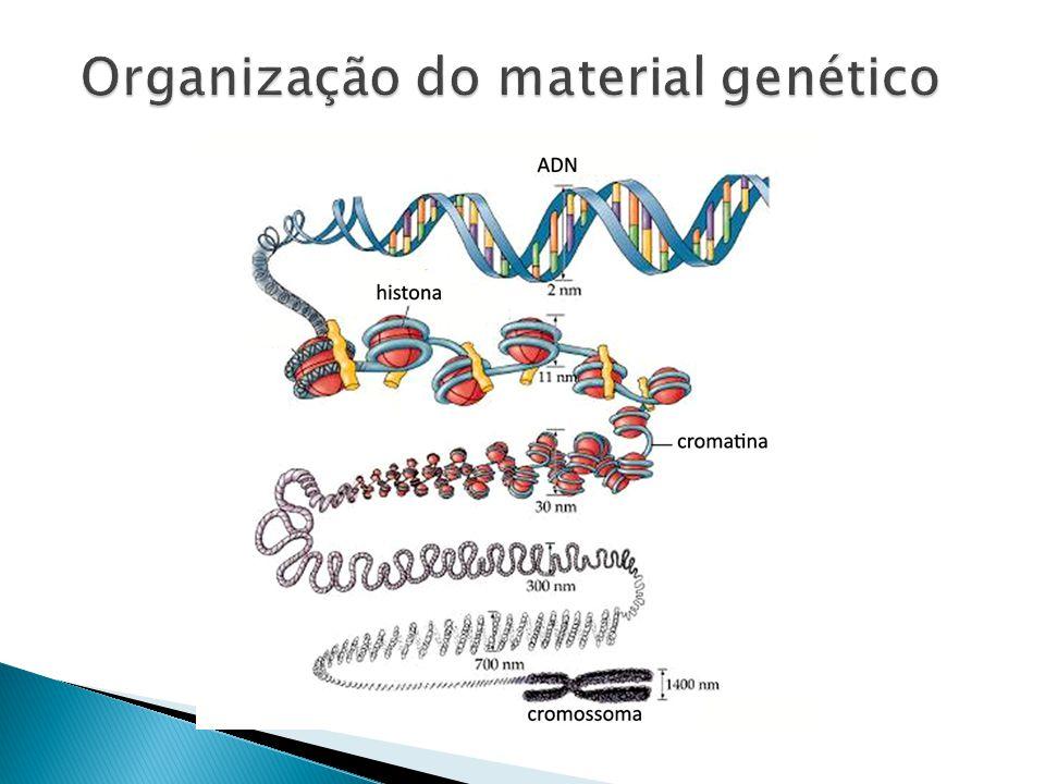 Organização do material genético