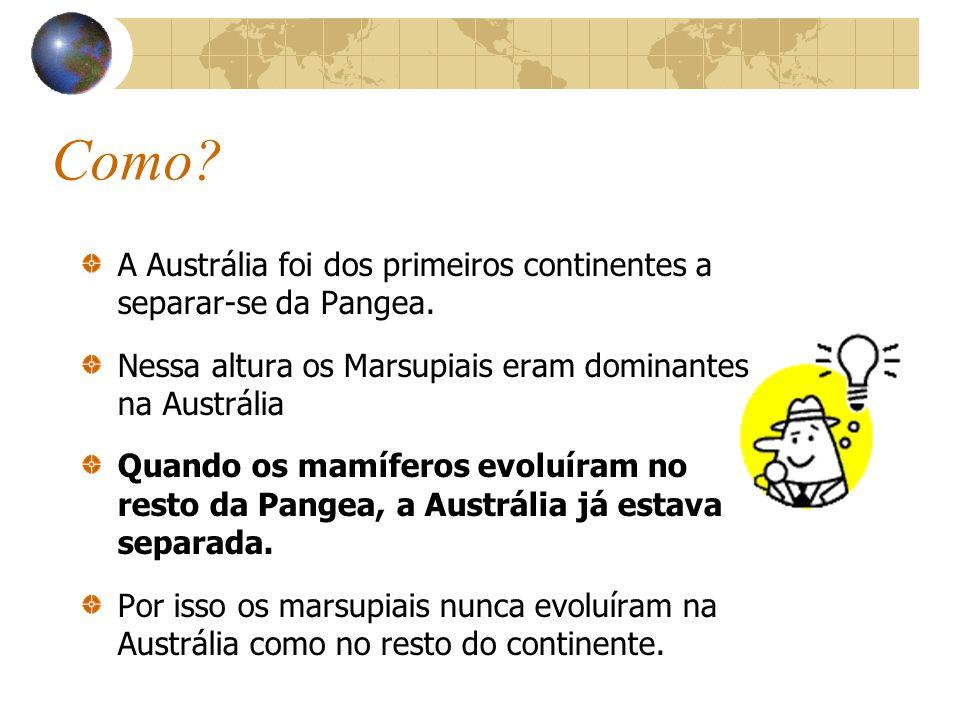 Como A Austrália foi dos primeiros continentes a separar-se da Pangea. Nessa altura os Marsupiais eram dominantes na Austrália.