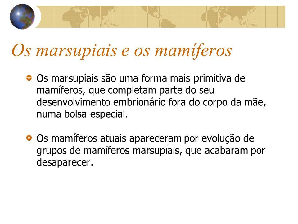 Os marsupiais e os mamíferos