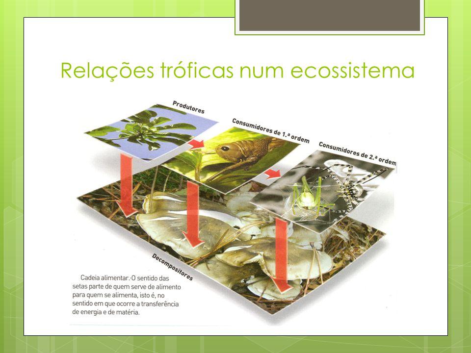 Relações tróficas num ecossistema