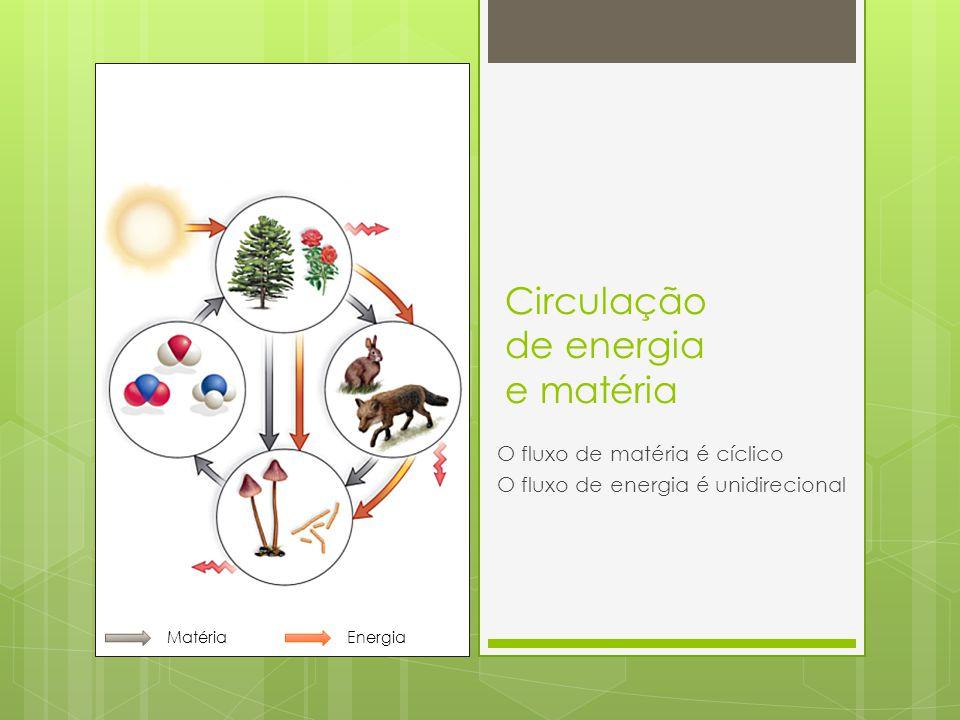 Circulação de energia e matéria