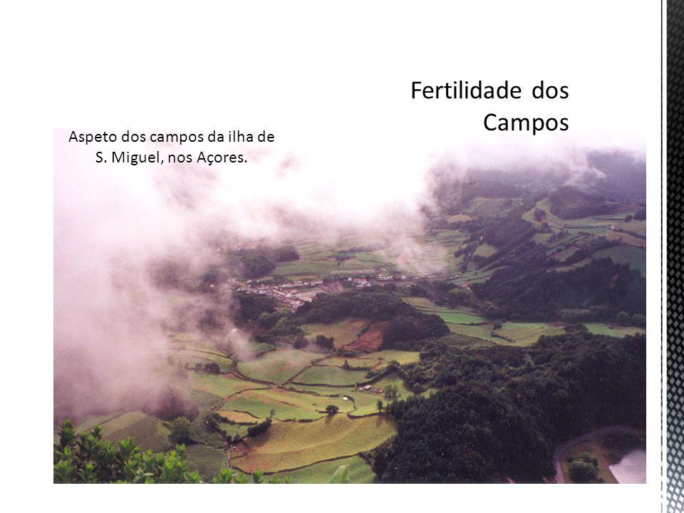 Fertilidade dos Campos