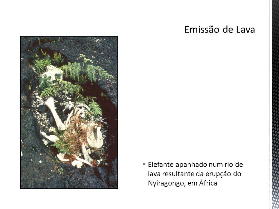 Emissão de Lava Elefante apanhado num rio de lava resultante da erupção do Nyiragongo, em África