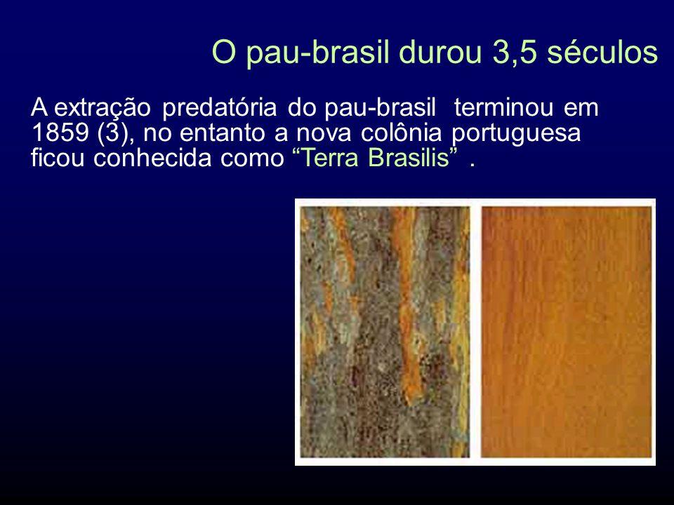 O pau-brasil durou 3,5 séculos