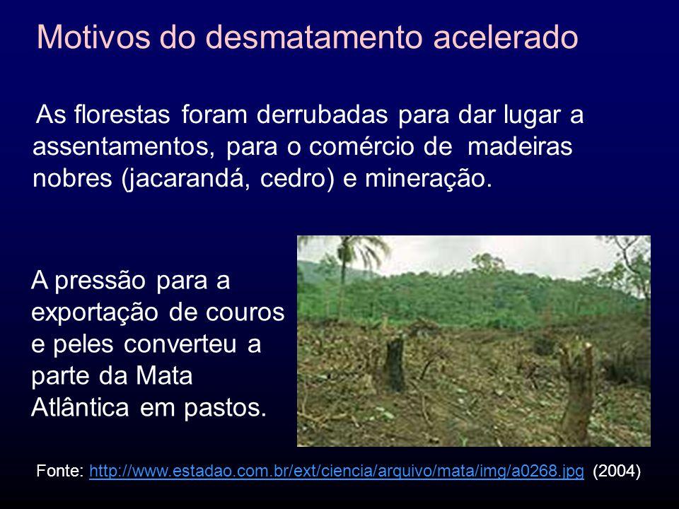 Motivos do desmatamento acelerado
