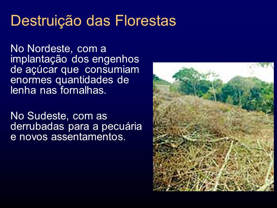 Destruição das Florestas