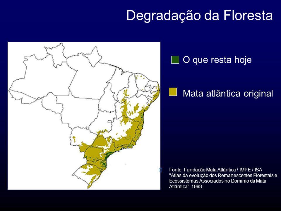 Degradação da Floresta