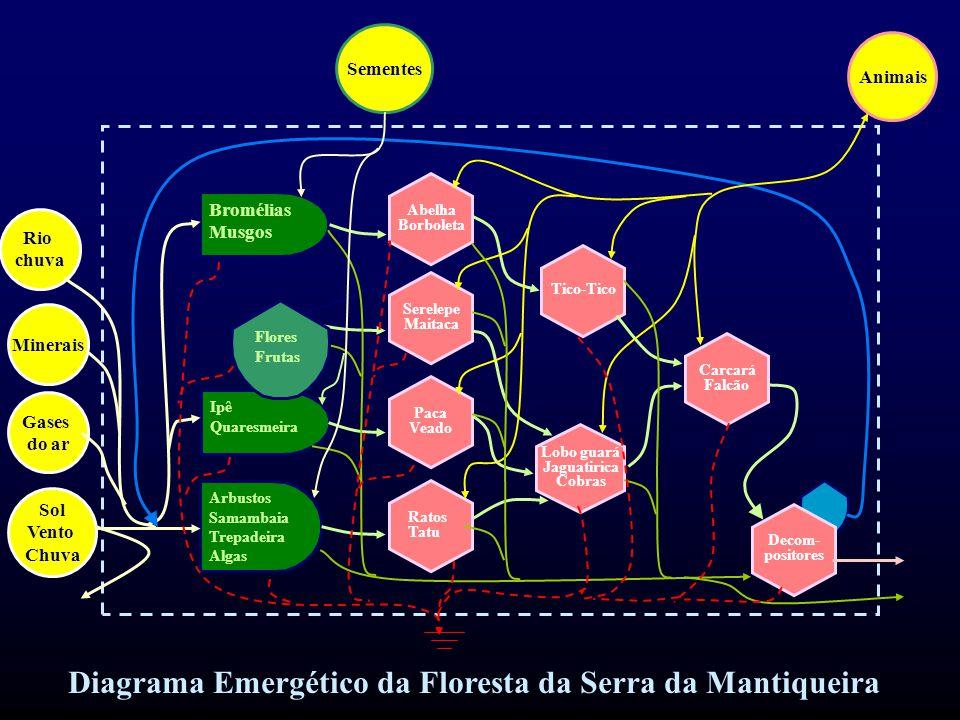 Diagrama Emergético da Floresta da Serra da Mantiqueira