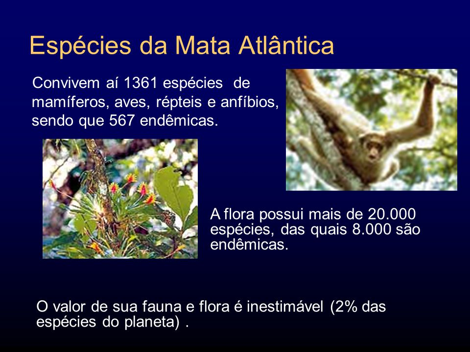 Espécies da Mata Atlântica