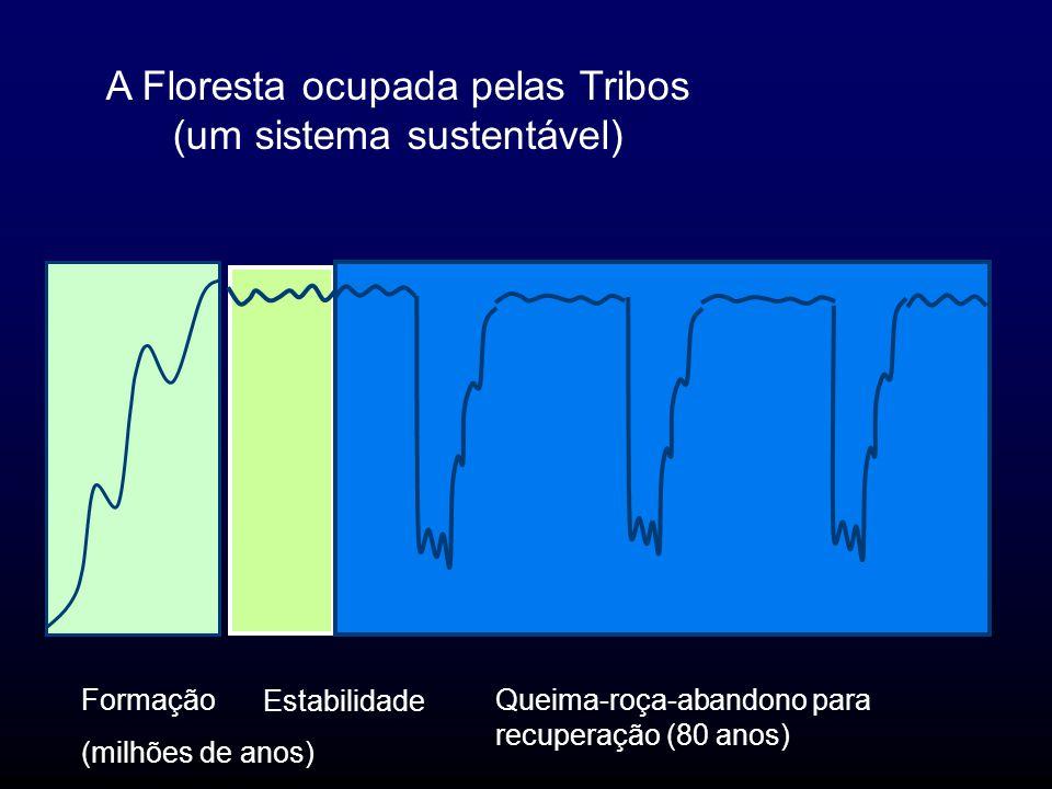 A Floresta ocupada pelas Tribos (um sistema sustentável)