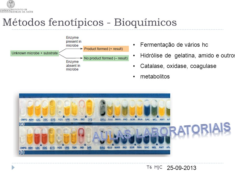 Métodos fenotípicos - Bioquímicos