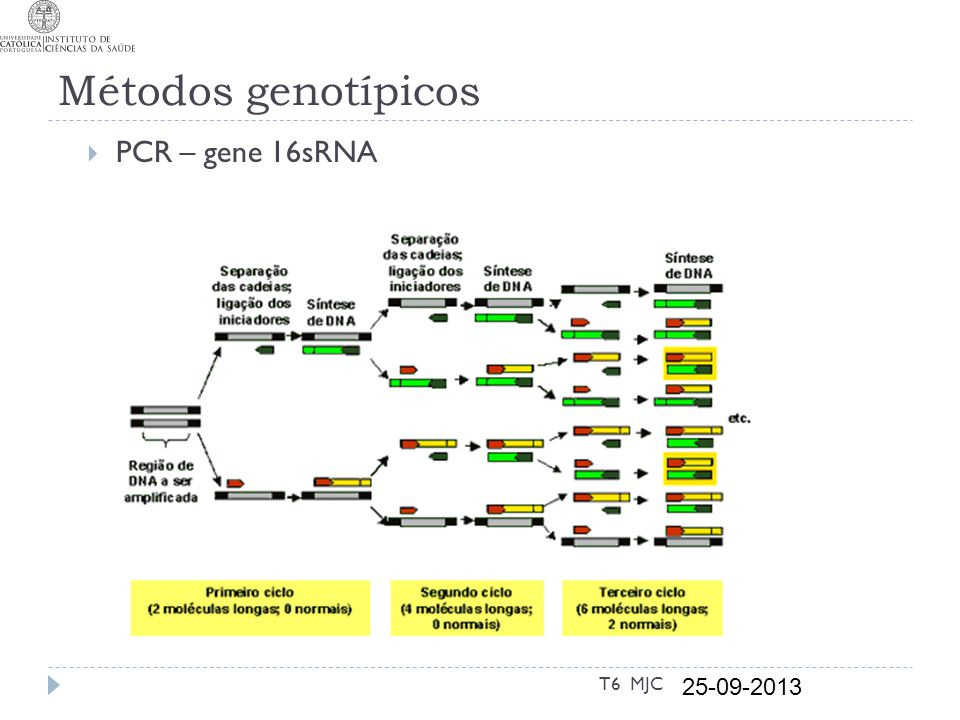 Métodos genotípicos PCR – gene 16sRNA T6 MJC 25-09-2013