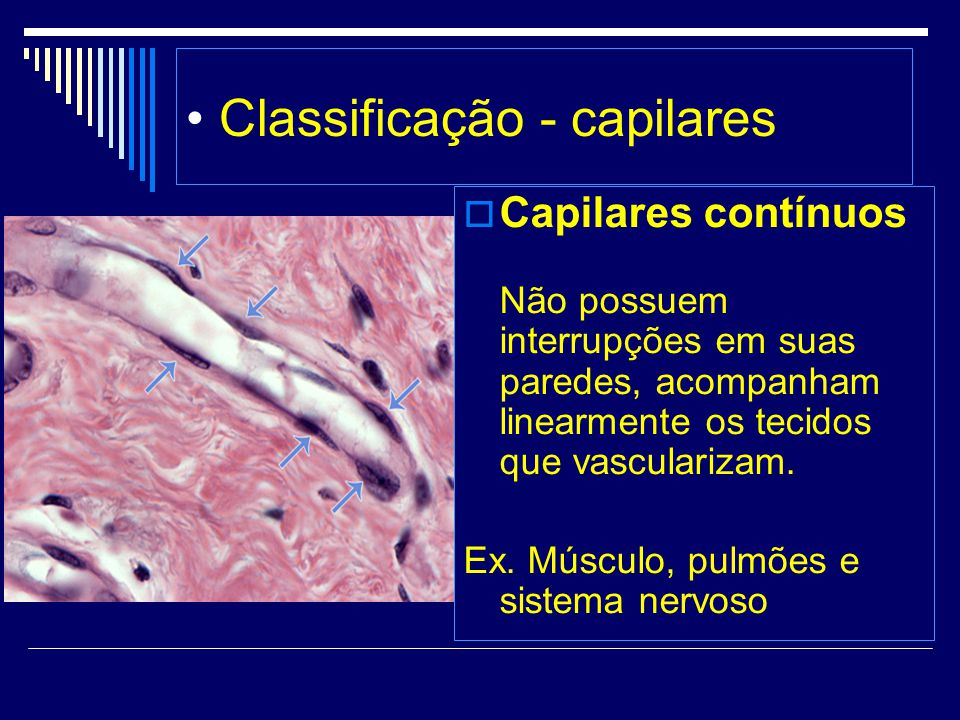 • Classificação - capilares