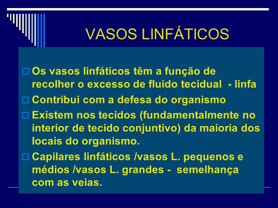VASOS LINFÁTICOS Os vasos linfáticos têm a função de recolher o excesso de fluido tecidual - linfa.