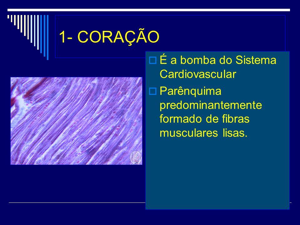 1- CORAÇÃO É a bomba do Sistema Cardiovascular