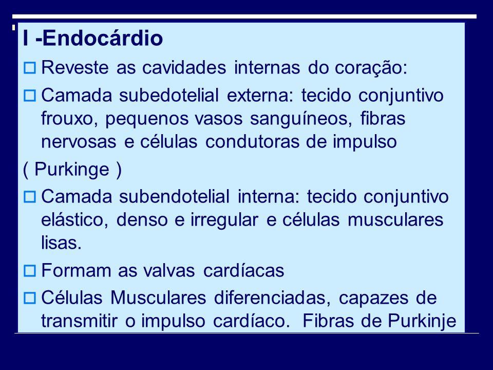 I -Endocárdio Reveste as cavidades internas do coração: