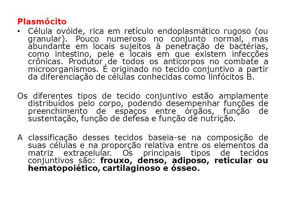 Plasmócito