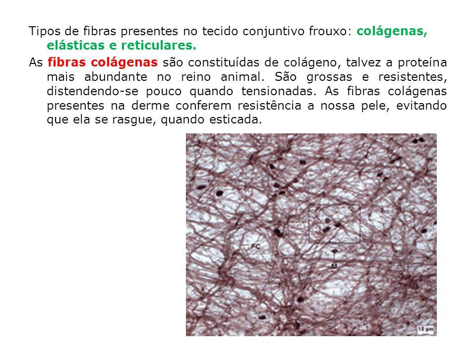 Tipos de fibras presentes no tecido conjuntivo frouxo: colágenas, elásticas e reticulares.
