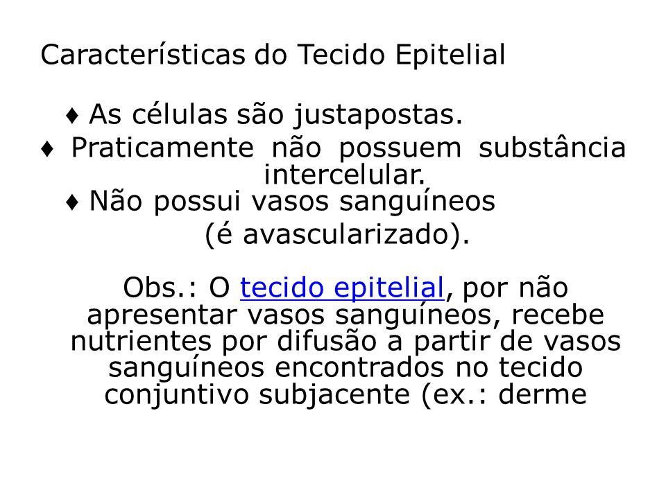 Características do Tecido Epitelial ♦ As células são justapostas