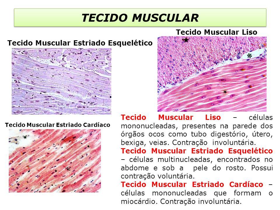 TECIDO MUSCULAR Tecido Muscular Liso