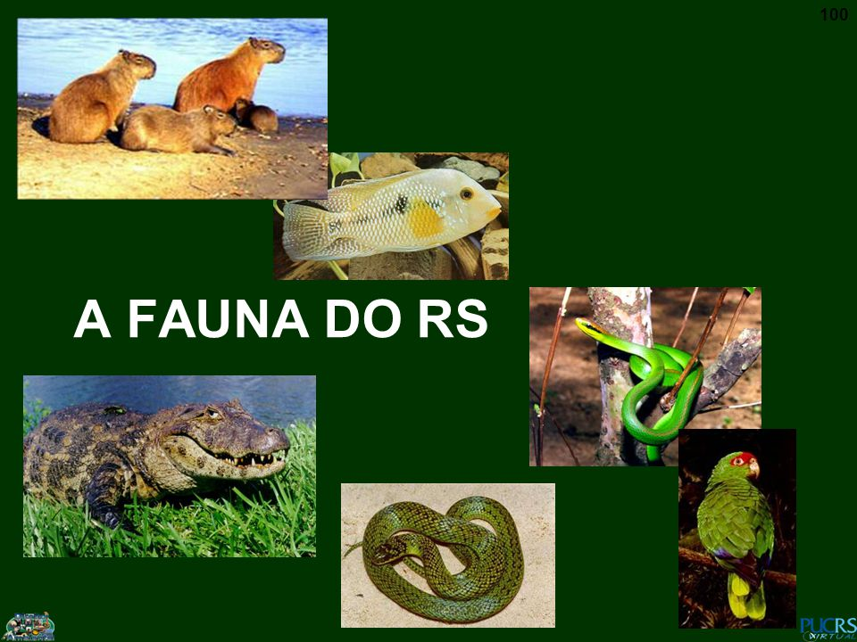 A FAUNA DO RS