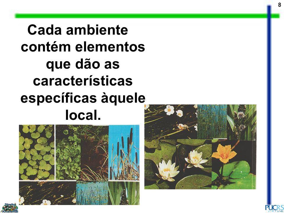 Cada ambiente contém elementos que dão as características específicas àquele local.