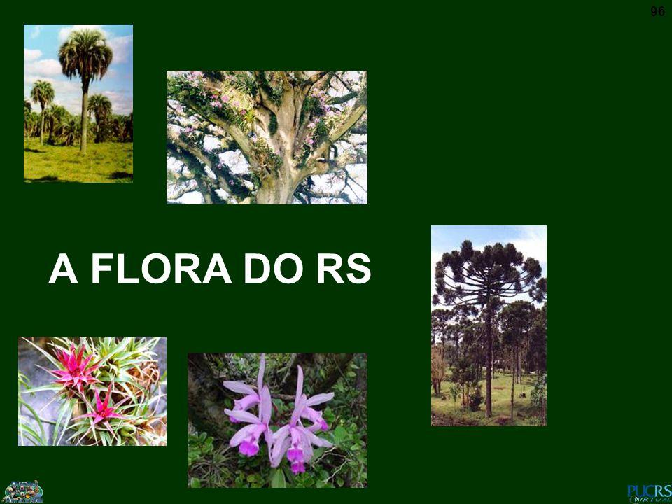 A FLORA DO RS