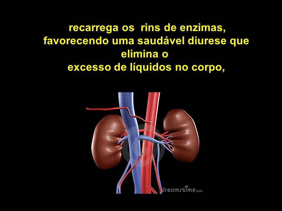 recarrega os rins de enzimas, favorecendo uma saudável diurese que elimina o excesso de líquidos no corpo,